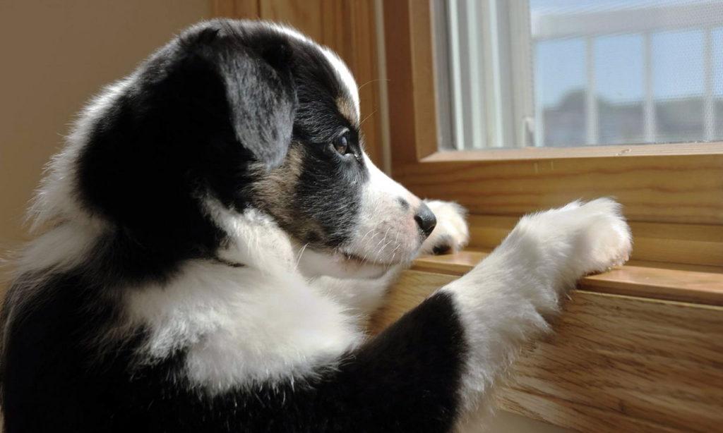 Собака одна дома.