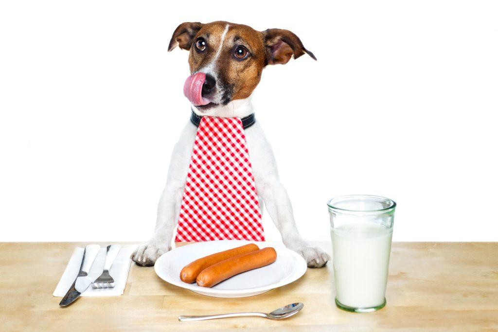 Чем кормить щенка джек рассела меню по возрастам