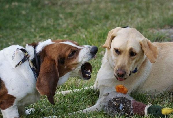 Как отучить лаять на других собак.