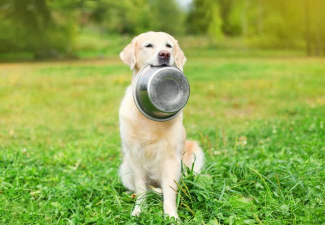 Недостаток витаминов у собаки.