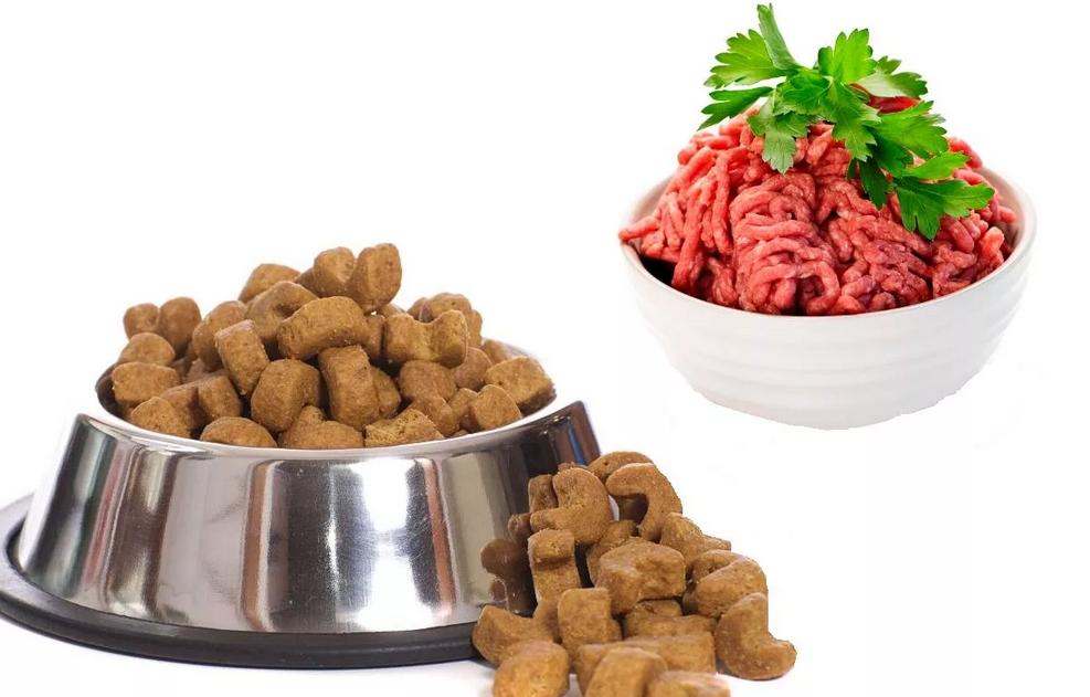 Сухой и натуральный корм для собаки.