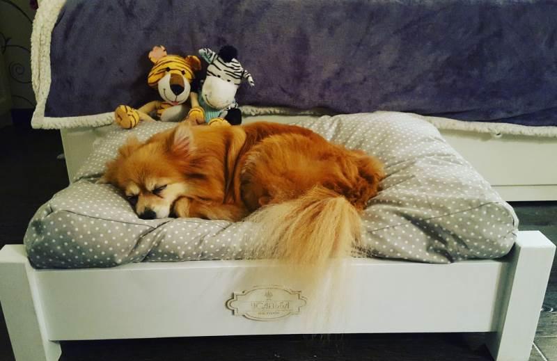Собака спит на лежанке.