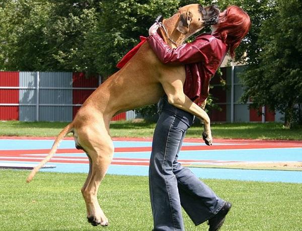 Как отучить собаку прыгать на людей от радости.