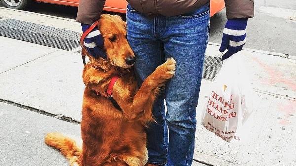 Как отучить пса прыгать на чужих.