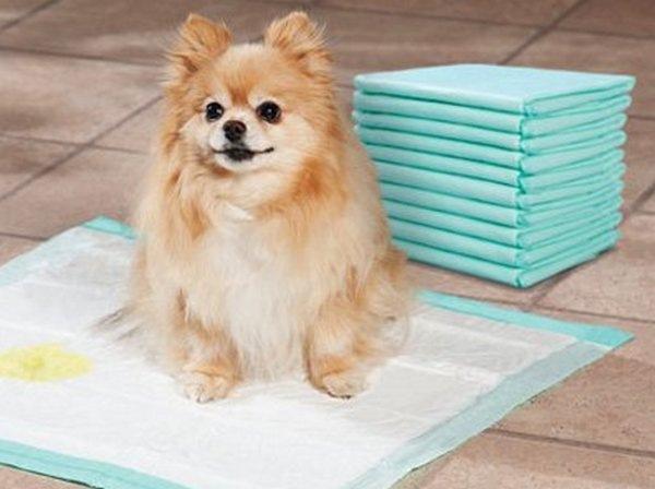 Померанец справляет нужду на гигиенический коврик.
