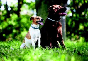 Защитные ошейники собакам.