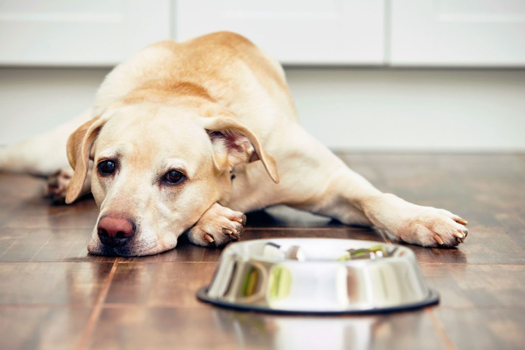Диета для собаки при МКБ