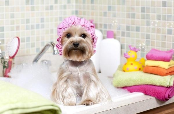 Йорк в ванной